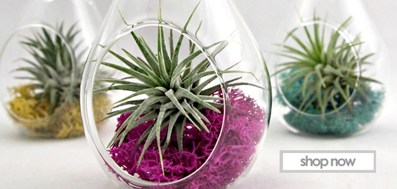 Wholesale Glass Vases Cylinder Vases Candy Jar Glass Terrarium