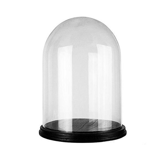"Cloches with Black Wood Base.H-16"", Wholesale Pack of 2 pcs"