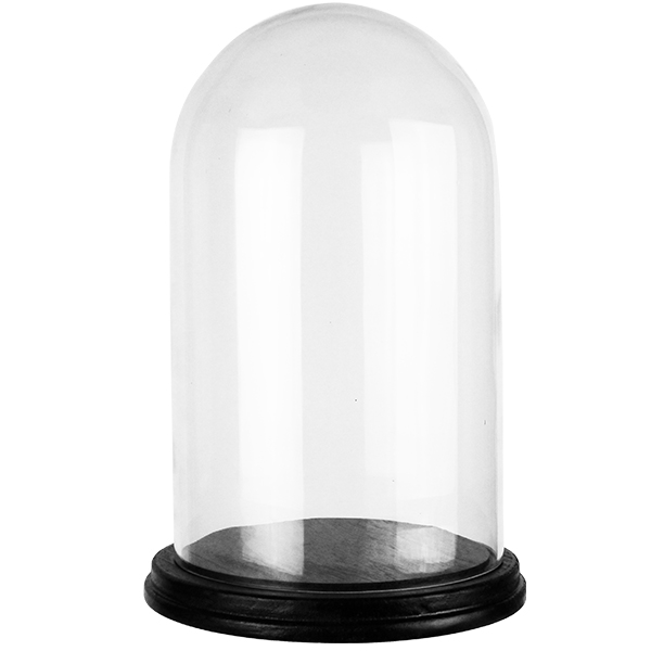 "Cloches with Black Wood Base. H-15"", Wholesale Pack of 4 pcs"