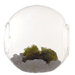 "Open Terrarium Candle Holder. H-5.5"", Pack of 18 pcs"